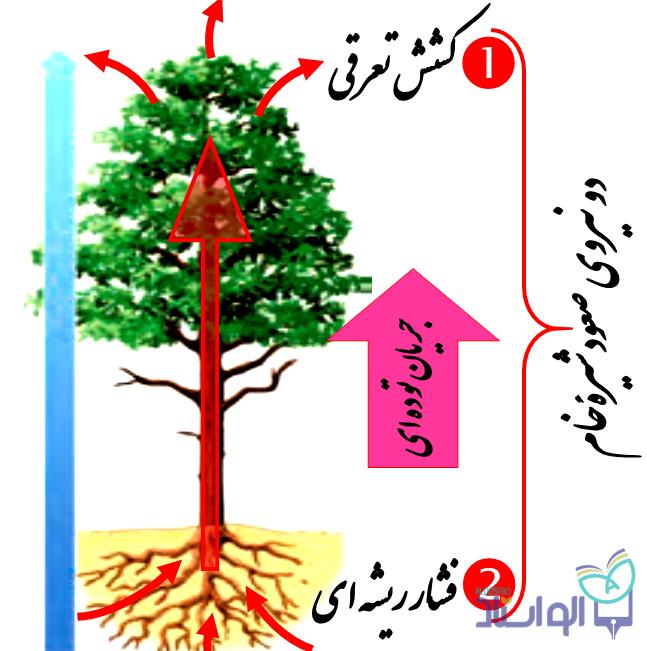 زیست شناسی گیاهی